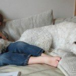 The ordinary moments #8: Deciding whether to take your dog to Australia