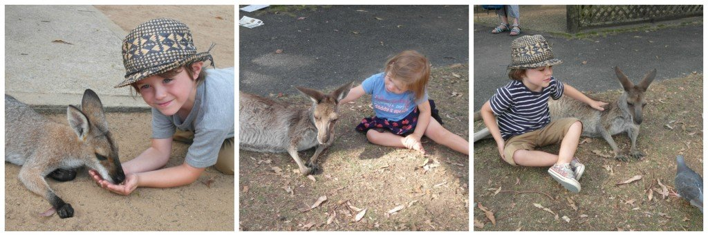 Collage of children petting kangaroos