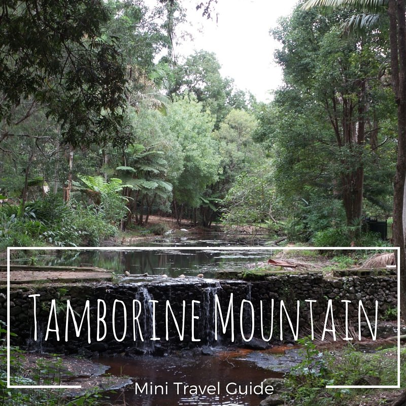 Picture of a Tamborine Mountain waterfall and creek