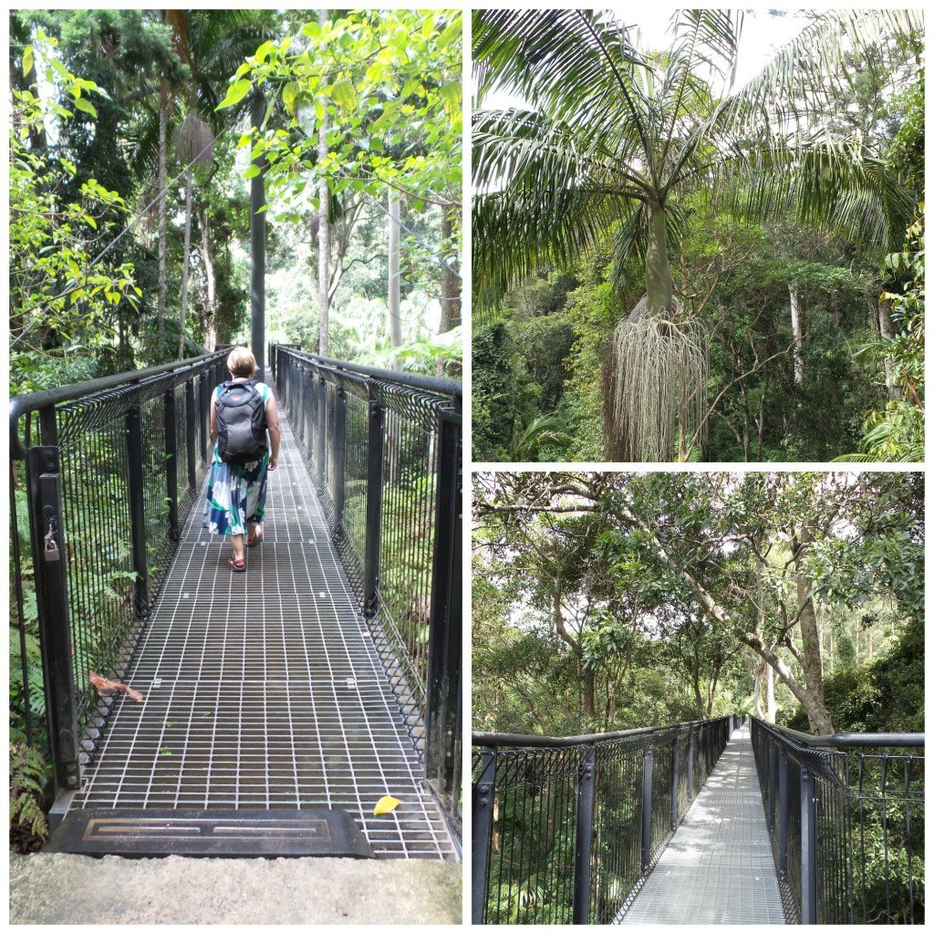 Skywalk at Tamborine Mountain